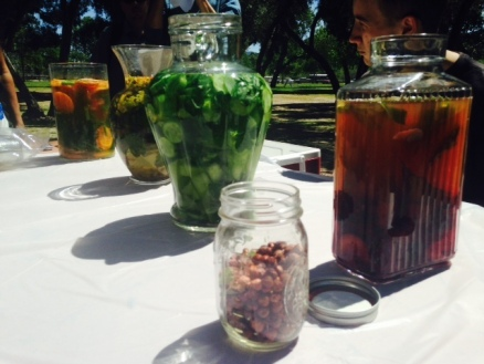 infusions-urban-forage